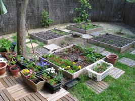 Photo d'un beau jardin divisé en quatre carrés, entouré d'un mur en bois.  Il y a un arbre au milieu.