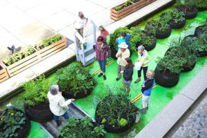 Photo : un jardin en deux rangées droites, sur fond vert lime, dans un espace extérieur du Grand Théâtre de Québec.  Une dame aux cheveux blancs expliquent de quoi à neuf personnes devant elle.