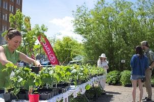 Photo : sous le soleil, une table blanche avec plusieurs plants ainsi que de grands arbustes. Une jeune femme souriante replante dans un pot et deux personnes discutent en observant les plus grands spécimens.