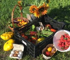 Photo : paniers de légumes et de fruits sur de gazon, ensoleillé.