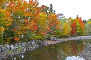 Photo d'une rivière peu profonde, bordée de pierres, et surtout d'arbres aux multipes couleurs de l'automne.