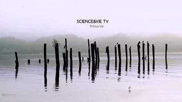 Capture-écran du début du ducumentaire : « Science et Vie TV présente ...». Photo de tiges en bois plantées dans un lac gris-blanc, couvert de brume. On discerne des collines ou montagnes environ 700 mètres plus loin.