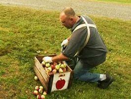 Capture-écran officiel du film : un homme chauve est penché sur une boîte en bois remplie de légumes. Il porte un panier attaché sur son ventre. Gazon autour.