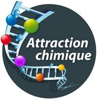 Logo : Attraction chimique, écrit sur un cercle bleu-gris. Une sorte d'échelle courbée monte de bas en haut, comme une spirale d'ADN, avec des points de couleur tout le long.