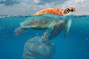 Photo à moitié dans l'eau bleu et au-dessus de l'eau : une tortue de mer avec un sac de déchet sous l'eau accroché à une de ses nageoires.