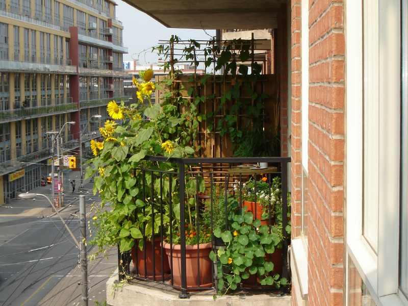 Jardin dense sur un petit balcon vue de côté.</body></html>