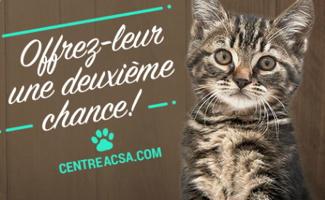 Affichette : photo d'un jeune chat à la fourure tigré gris, beige et brun. Offrez-leur une deuxième chance ! centreacsa.com