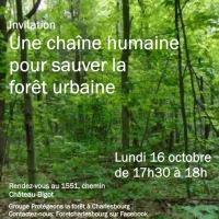 Affiche sur fond d'une photo de la forêt très verte.