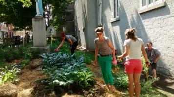 Photo: quatre personnes en action au potager de Verdir Saint-Roch: jardin très vert au bord de l'ancienne église tout près de la rue.