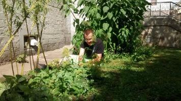 Un jeune homme impliqué dans Verdir Saint-Roch jardine au potager de La Nef. Gazon et plans très verts sur le bord d'un mur de pierre.